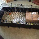 C&C Guinea Pig Cage - Lid Clips