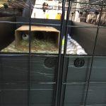 C&C guinea pig cage proplex connectors